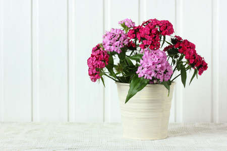 Turkish carnation bouquet on the table on a white background. garden flowers, summer still life. Stock Photo