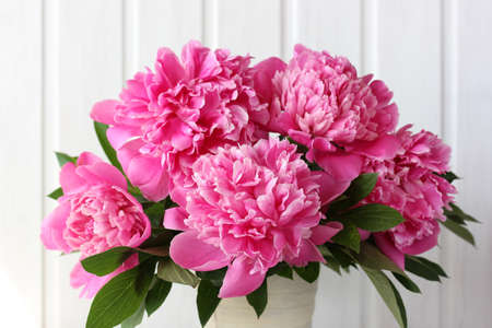 pink peonies on a white background. bouquet of garden flowers.