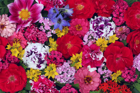 floral background, top view. roses, carnations and other garden flowers. beautiful backdrop for a greeting or greeting card.