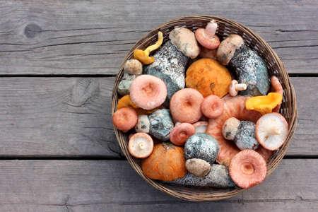 basket of edible mushrooms, top view. orange-cap boletus, chanterelle and coral milky cap.