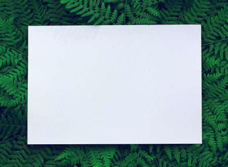 an empty white leaf on a background of green fern leaves. mockup, scene creator. Stock Photo