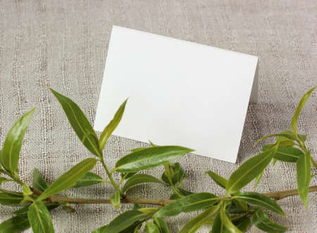 mockup, scene creator. white blank card and a branch with young fresh green leaves. the natural background. copy space. Stock Photo