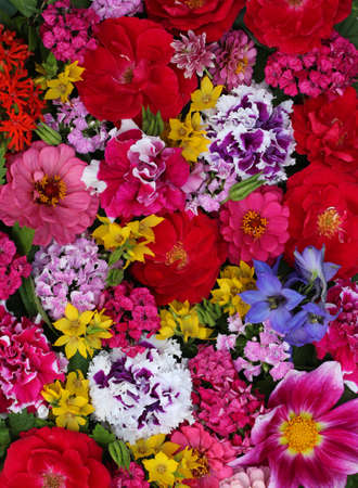 summer floral background with red garden roses, carnations and petunias, top-down view. backdrop, natural texture. garden flowers.