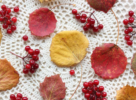 background with autumn aspen leaves and viburnum berries on a light lace tablecloth, top view. Stock Photo