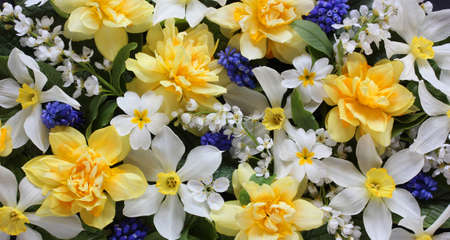 floral background with spring daffodils, top-down view. backdrop, natural texture. buds and inflorescences. Stock Photo