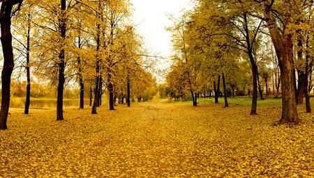 Mellow autumn in park in Vitebsk photo