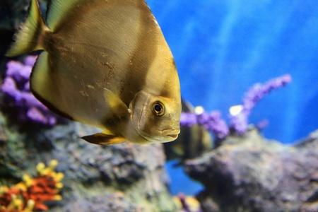 tropical sea fish in aquarium photo