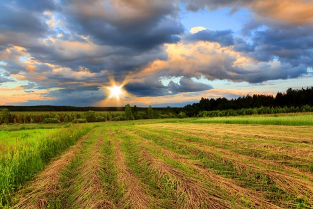 Oblique field of wheat on a sunset Stock Photo - 9797409