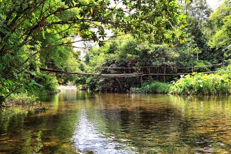The bridge on the river in jungle, Thailand photo