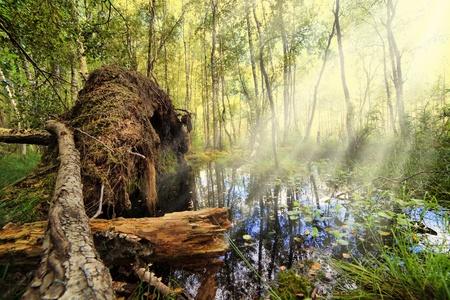 tumbled: The tumbled down tree in impassable jungle Stock Photo