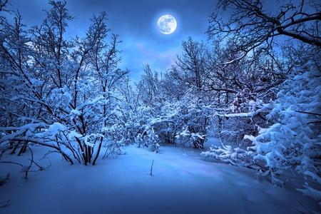 montañas nevadas: Luz de la luna la noche en invierno en el bosque Foto de archivo
