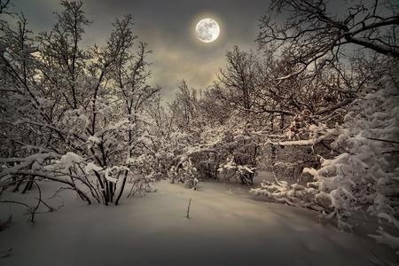monta�as nevadas: Luz de la luna la noche en invierno en el bosque Foto de archivo