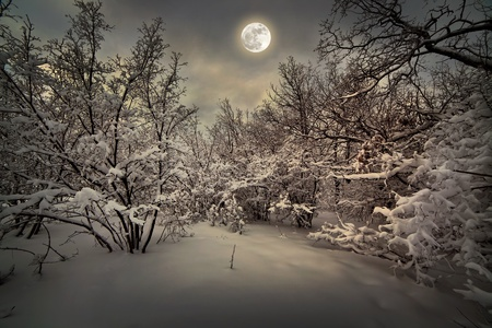 Moonlight night in winter wood Stock Photo