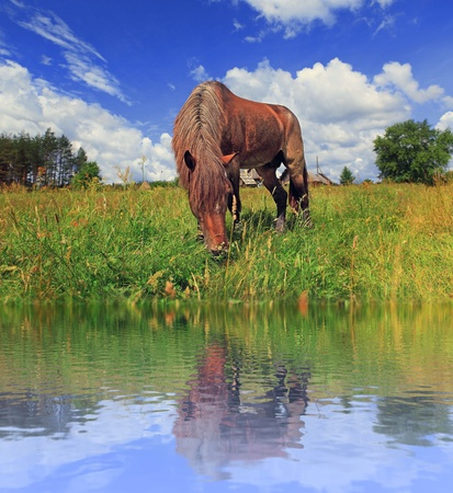 The horse is grazed on the bank of lake photo