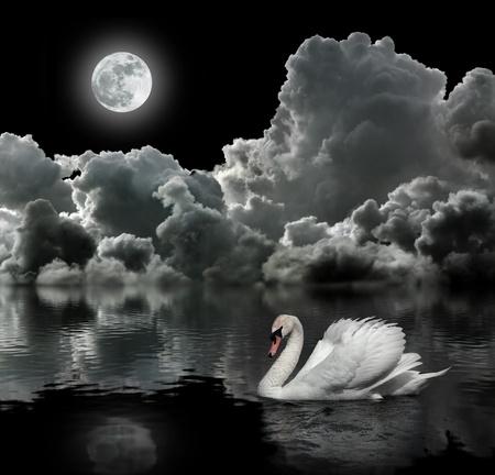 swans: Cisne blanco en la noche bajo la luna Foto de archivo