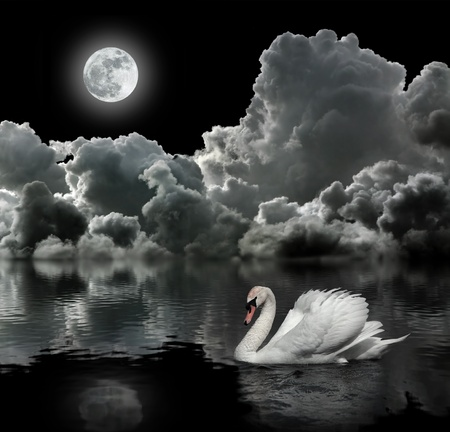 White swan at night under the moon Stock Photo