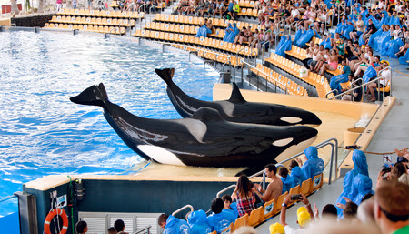 grampus: PUERTO DE LA CRUZ, TENERIFE - JULY 12: New Orca Ocean exhibit has helped the Loro Parque become Tenerifes second most popular attraction on July 12, 2014 in Puerto De La Cruz, Tenerife