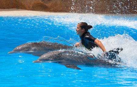 grampus: PUERTO DE LA CRUZ, TENERIFE - JULY 12: Dolphin show in the Loro Parque, which is now Tenerifes second largest attraction with europes biggest dolphin pool on July 12, 2014 in Puerto De La Cruz, Tenerife Editorial