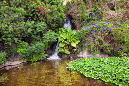 Small waterfall in the picturesque jungle Stock Photo