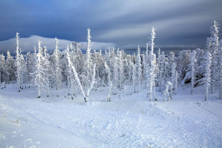 Snowy forest on top of the mountains Belaya. Ural region. Stock Photo