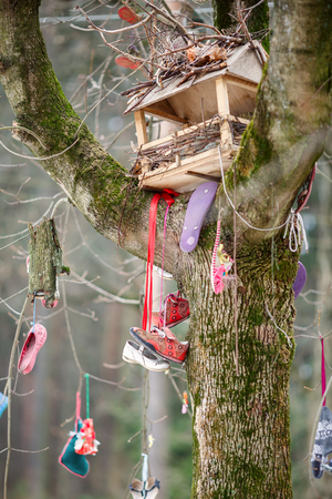 The wonder tree near the museum of famous Russian children's writer Korney Chukovsky,, hung with old children's shoes. Village Peredelkino, Moscow region, Russia.