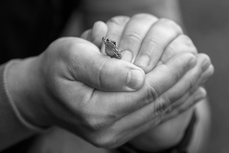 Frog sitting in the hands of a man, raising its leg in greeting. Stock Photo