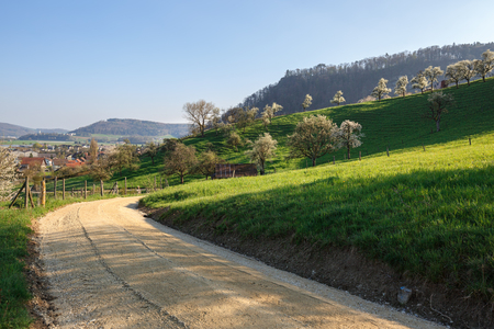 Spring landscape with blooming fruit trees. Village of Villigen, Brugg district, canton of Aargau, Switzerland, Europe.