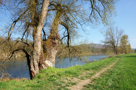 Beautiful park on banks of the Aare river on a sunny spring day in the village of Villigen, district of Brugg, canton of Aargau, Switzerland, Europe. 写真素材