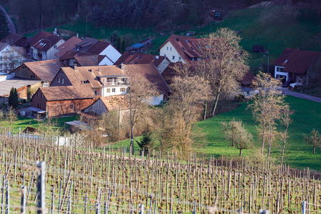 View of the village of Villigen surrounded with vineyards on a sunny spring day. Villigen, Brugg district, canton of Aargau, Switzerland, Europe. 写真素材