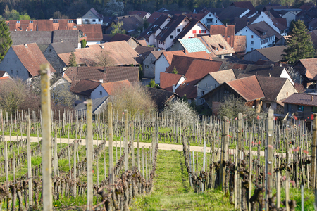 View of the village of Villigen surrounded by vineyards on a sunny spring day. Villigen, Brugg district, canton of Aargau, Switzerland, Europe. 写真素材