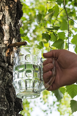 indigenous medicine: birch juice and a glass in his hand Stock Photo