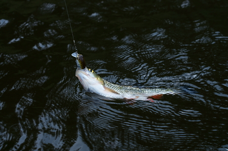 avocation: fish caught in the lure Stock Photo