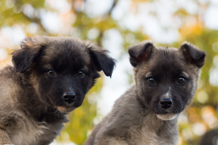 mutts: two fluffy puppies sitting together and watching carefully Stock Photo