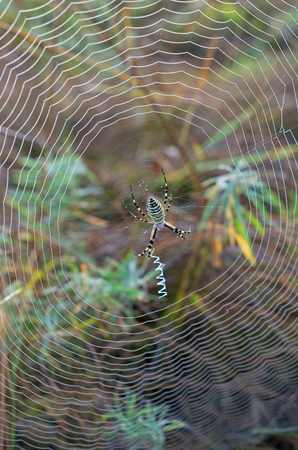 Web with a spider in the center, on a background of grass Stock Photo