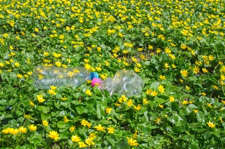 discarded plastic bottle in the grass with yellow flowers 免版税图像