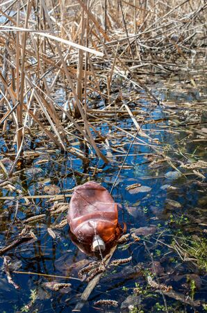discarded plastic bottle in river water