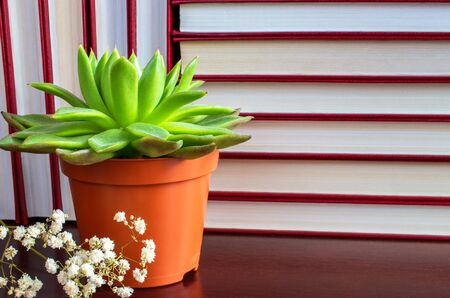flower succulent in a pot on the background of book rows