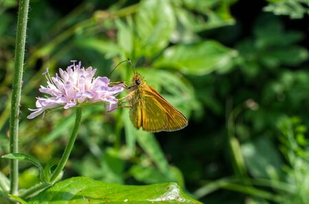 beautiful butterfly collects nectar on a flower