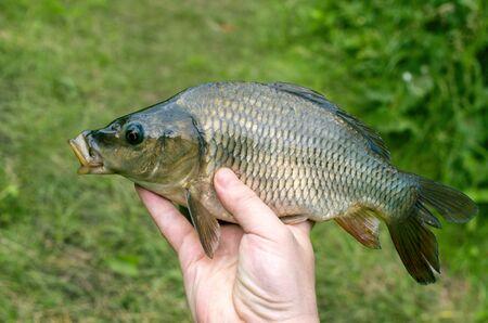 Carp caught in his hand fisherman