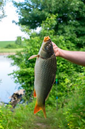 carp fish caught in the lake in hand