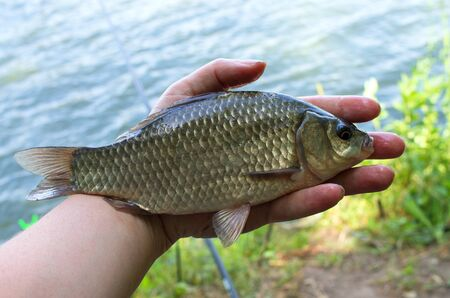 crucian carp caught in his hand fisherman