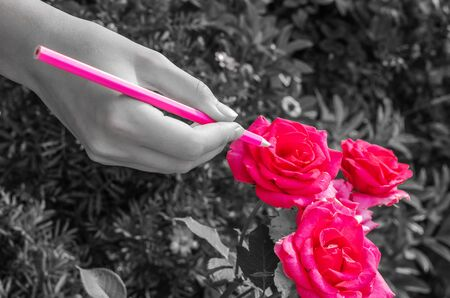 girl paints roses in red color with a pencil in a flowerbed, black and white background
