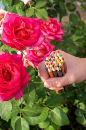 color pencils in hand on a background of roses flowers