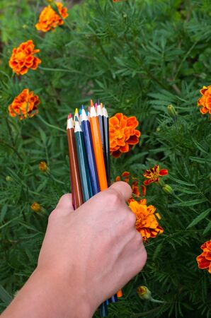 color pencils in hand on a background of marigold flowers