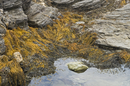 Sea weed is revealed during a low tide period along the shoreline in Newport Rhode Island Stock fotó - 114752235