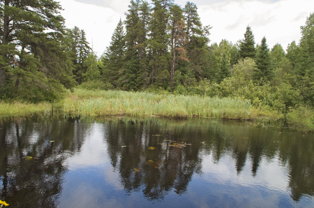A pond forming behind a Beaver Dam in Ontario Canada