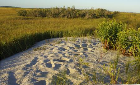 Footprints along a beach in the Delaware Bay