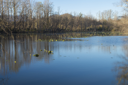 A lake for catch and release fishing in a campground in Western North Carolina Stockfoto