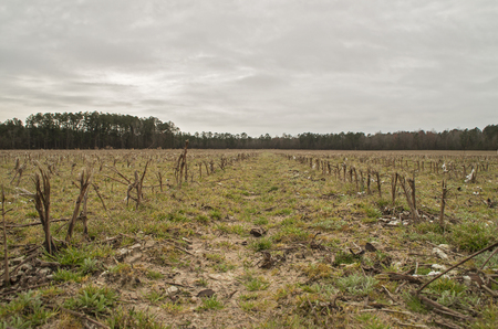 A field in the late winter after the harvest of the cotton crop