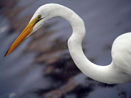 Unknown Bird Imagens